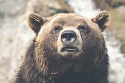 Bär; Bildquelle: www.pixabay.com