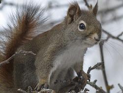 Eichhörnchen; Bildquelle: www.pixabay.com