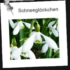 schneegl ckchen edugroup. Black Bedroom Furniture Sets. Home Design Ideas