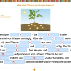 Biologie: Blütenpflanzen - FWU